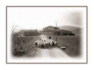 ramat ovelles